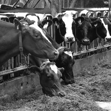 LTO Verzekeringen introduceert het vernieuwde Agrarisch verzekeringspakket