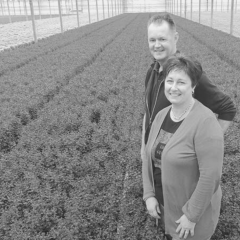 Chrysantenkwekerij Westeringh Flowers sloot het hele glastuinbouwpakket over