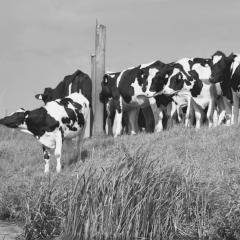 Verzeker uw veehouderij en vermijd risico´s