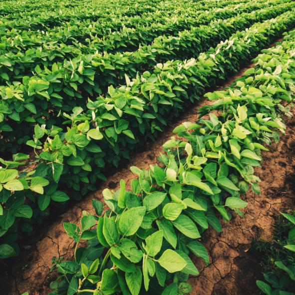 Wat voor gevolgen heeft corona voor mijn gewassenverzekering?